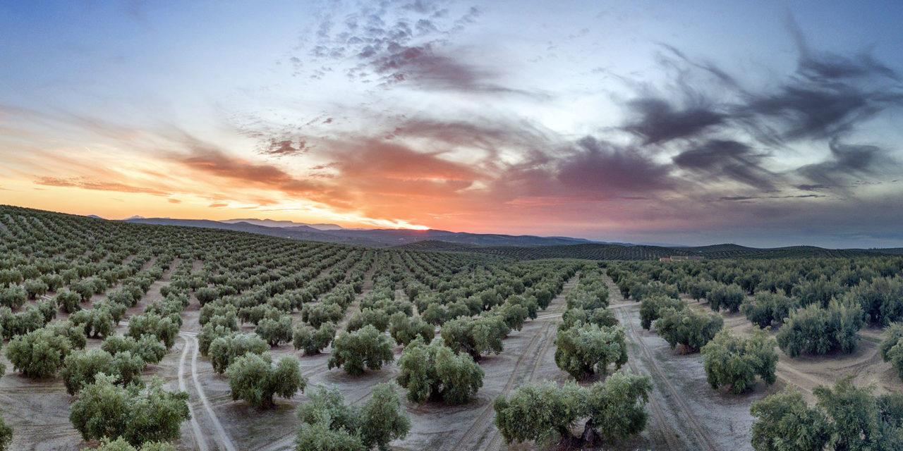 Jaén, un paraíso de oportunidades