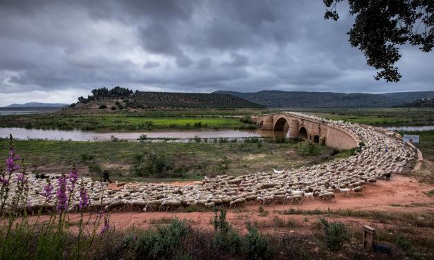 La Junta favorece el relevo generacional ganadero en Cazorla, Segura y Las Villas