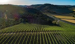 El vino entre olivos