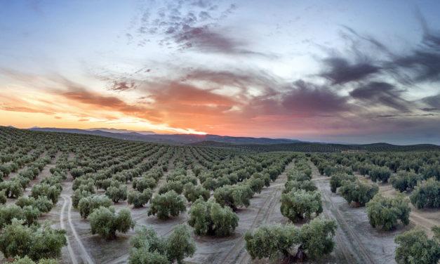 Andalucía, viaje por un infinito océano de olivos