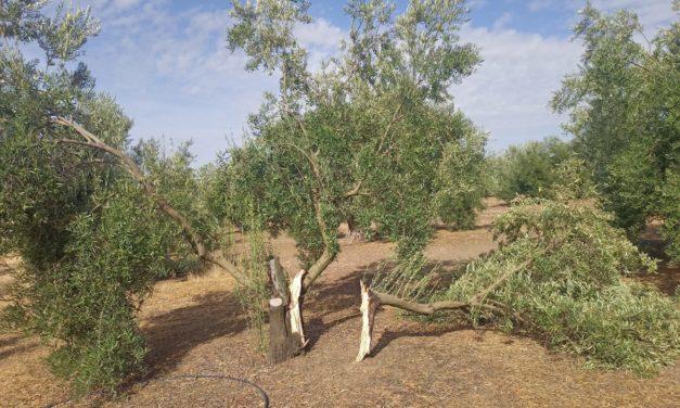 Frente a la catástrofe, seguros agrarios